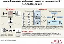 Proteome Analysis of Isolated Podocytes Reveals Stress Responses in Glomerular Sclerosis