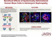 Beneficial Effects of Systemically Administered Human Muse Cells in Adriamycin Nephropathy