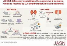ADCK4 Deficiency Destabilizes the Coenzyme Q Complex, Which Is Rescued by 2,4-Dihydroxybenzoic Acid Treatment