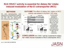 Kir4.1/Kir5.1 Activity Is Essential for Dietary Sodium Intake–Induced Modulation of Na-Cl Cotransporter