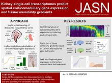 Kidney Single-cell Transcriptomes Predict Spatial Corticomedullary Gene Expression and Tissue Osmolality Gradients