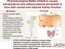 Pharmacological Npt2a Inhibition Causes Phosphaturia and Reduces Plasma Phosphate in Mice with Normal and Reduced Kidney Function