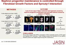 Nephron Progenitor Maintenance Is Controlled through Fibroblast Growth Factors and Sprouty1 Interaction