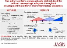 The Kidney Contains Ontogenetically Distinct Dendritic Cell and Macrophage Subtypes throughout Development That Differ in Their Inflammatory Properties