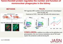 Tamm-Horsfall Protein Regulates Mononuclear Phagocytes in the Kidney
