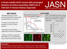 A Novel Soluble ACE2 Variant with Prolonged Duration of Action Neutralizes SARS-CoV-2 Infection in Human Kidney Organoids