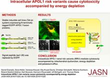 Intracellular APOL1 Risk Variants Cause Cytotoxicity Accompanied by Energy Depletion