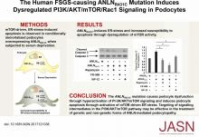 The Human FSGS-Causing <em>ANLN</em> R431C Mutation Induces Dysregulated PI3K/AKT/mTOR/Rac1 Signaling in Podocytes