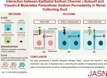 Interaction between Epithelial Sodium Channel <em>γ</em>-Subunit and Claudin-8 Modulates Paracellular Sodium Permeability in Renal Collecting Duct