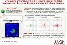 Live Imaging of Monocyte Subsets in Immune Complex-Mediated Glomerulonephritis Reveals Distinct Phenotypes and Effector Functions