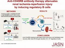 Anti-CD45RB Antibody Therapy Attenuates Renal Ischemia-Reperfusion Injury by Inducing Regulatory B Cells