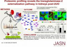 Proteomic Profiling Reveals the Transglutaminase-2 Externalization Pathway in Kidneys after Unilateral Ureteric Obstruction