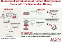 Successful Introduction of Human Renovascular Units into the Mammalian Kidney