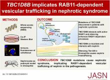 <em>TBC1D8B</em> Mutations Implicate RAB11-Dependent Vesicular Trafficking in the Pathogenesis of Nephrotic Syndrome