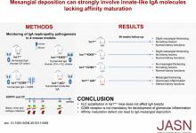 Mesangial Deposition Can Strongly Involve Innate-Like IgA Molecules Lacking Affinity Maturation