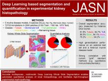 Deep Learning–Based Segmentation and Quantification in Experimental Kidney Histopathology