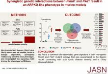Synergistic Genetic Interactions between <em>Pkhd1</em> and <em>Pkd1</em> Result in an ARPKD-Like Phenotype in Murine Models