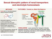 Sexual Dimorphic Pattern of Renal Transporters and Electrolyte Homeostasis